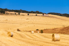 Tuscan fields Royalty Free Stock Images