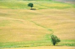 Tuscan amazing fields, Italy Royalty Free Stock Image