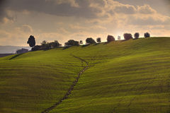 Tuscan Fields. In Italy during a warm summer evening Stock Photo