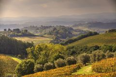 Tuscan Fields. In Italy during a warm summer evening Stock Photography