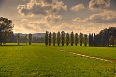 Tuscan Fields. In Italy during a warm summer evening Stock Images