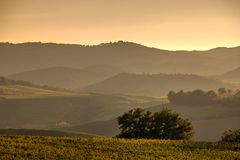 Tuscan Fields. In Italy during a warm summer evening Stock Photos