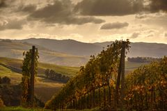 Tuscan Fields Royalty Free Stock Photography