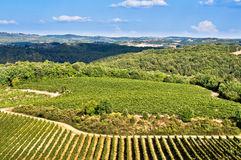 Tuscan fields, vineyards and woods Royalty Free Stock Photos