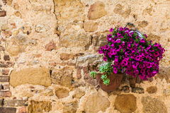 Tuscan flowers Stock Photos