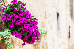 Tuscan flowers Royalty Free Stock Photos