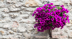 Tuscan flowers Royalty Free Stock Photography