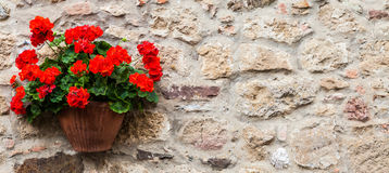 Tuscan flowers Royalty Free Stock Photo