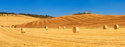 Tuscan gold Stock Photography
