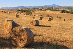 Tuscan hay bales. Landscape view showing rolling Tuscan countryside with hay bales Royalty Free Stock Image