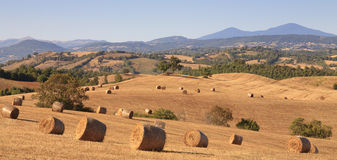 Tuscan hay bales. Panorama view showing rolling Tuscan countryside with hay bales Stock Photography