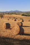 Tuscan hay bales. Portrait view showing rolling Tuscan countryside with hay bales Royalty Free Stock Images