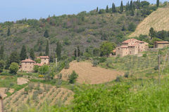 The Tuscan Hills. The olive tree covered Tuscan hills of Italy, Europe stock photo