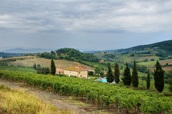 Tuscan hills. With house, vineyard and cypress trees royalty free stock photos