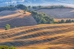 Tuscan hills and fields Stock Images