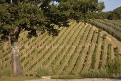 Tuscan hills Stock Photos