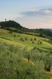 Tuscan Hills near Tavarnelle. The rolling hills of Tuscany are covered in a patchwork of fields, cyprus groves, and olive trees Stock Photo
