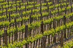 The Tuscan hills Stock Photos