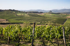 Tuscan hills Royalty Free Stock Images
