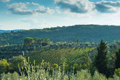 Tuscan hillside vineyard early autumn with houses Stock Photos
