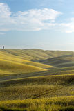 Tuscan horizon Royalty Free Stock Photo