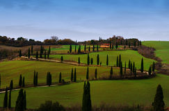 Tuscan landscape. Typical landscape with cypresses in Tuscany, Italy Royalty Free Stock Photos