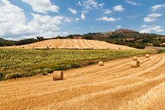Tuscan landscape Royalty Free Stock Image