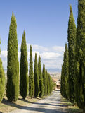 Tuscan Landscape, Cypress Near A Street Royalty Free Stock Photo