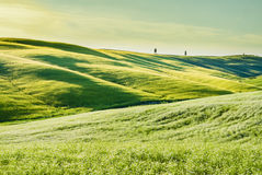 Tuscan landscape, with green grass and rolling hills Stock Image