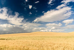 Tuscan landscape, Italy. Stock Images