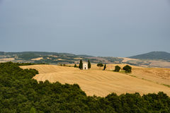 Tuscan landscape with a little church at the horizon surronded b. Y a wheat field and trees in summer royalty free stock photography