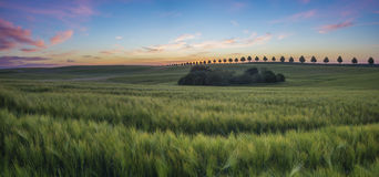 Tuscan landscape in the morning Royalty Free Stock Photos