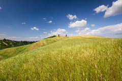 Tuscan landscape near Certaldo (Florence, Italy) Stock Images