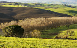 Tuscan landscape. A picture taken in early spring, in beautiful Tuscany, right after sunrise Stock Image