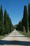 Tuscan landscape. Tuscan road to the wine cellar stock images