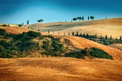 Tuscan landscape in summer time Royalty Free Stock Photo