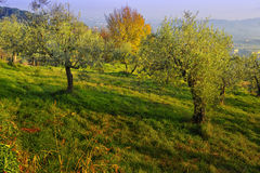 Tuscan landscape in winter Stock Images