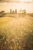 Tuscan landskap med ett kapell på solnedgången Arkivfoto