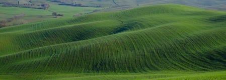 Tuscan lawn Fotografering för Bildbyråer