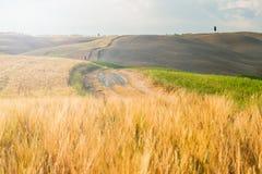 Tuscan lugn som går på vägen mellan fält Arkivbild