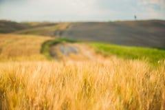 Tuscan lugn som går på vägen mellan fält Arkivbilder