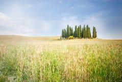 Tuscan lugn som går på vägen mellan fie Arkivfoton