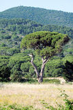 Tuscan nature landscape Royalty Free Stock Photography