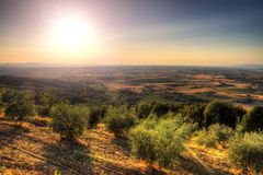 Tuscan olive landscape. Beautiful landscape of Tuscany, Italy, at sunset in summer with some olive trees stock image