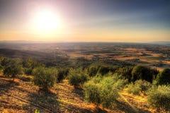 Tuscan olive landscape Stock Image