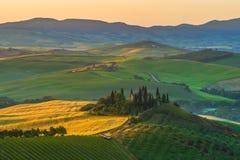 Tuscan olivträd och fält i de near lantgårdarna, I Arkivfoto