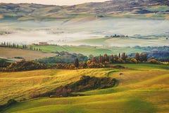 Tuscan olivträd och fält i near lantgårdar, Italien Royaltyfri Bild