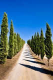 Tuscan road and cypress Royalty Free Stock Photo