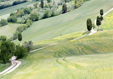Tuscan road and cypress trees Stock Photos