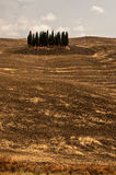 Tuscan scenery in september. Cypress trees in Tuscany,Italy Royalty Free Stock Photo
